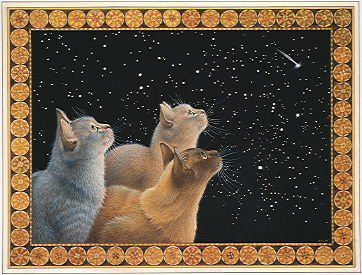 Copyright Lesley Ivory - Three feline dignitaries and the Christmas sky