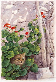 Copyright Lesley Ivory - Katia Greek cat in geraniums