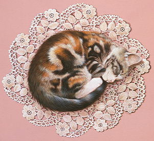 Copyright Lesley Ivory - Avril asleep on lace