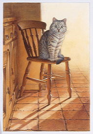 Copyright Lesley Ivory - Mintaka on his kitchen chair