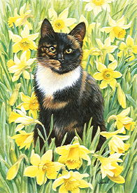 Copyright Lesley Ivory - Motley in wild daffodils