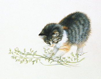Copyright Lesley Ivory - Agneatha playing with grasses