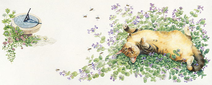 Copyright Lesley Ivory - Sheena in catmint