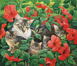 Copyright Lesley Ivory - Mother and kittens in hibiscus, Morocco